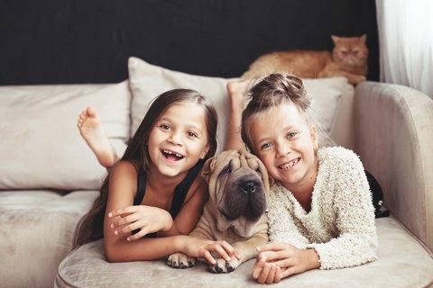 Pets are Family Members Too - NOVA Estate Lawyers – Leesburg, Virginia